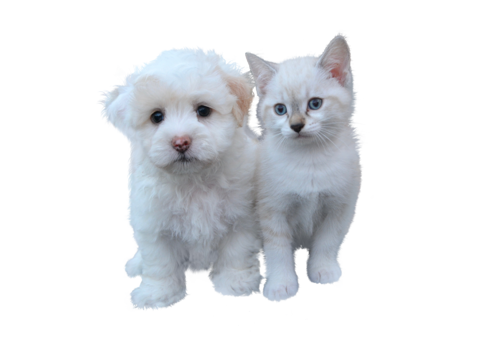 Tarif ASSURANCE CHIENS-CHATS ANIMALIN